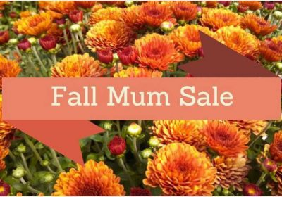 Mum Sale Saturday